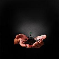 Plant it for TOMORROW by Renatta .
