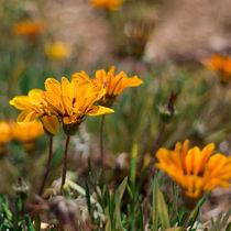 Yellow flowers by Inna Merkish