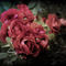 Roses-rouges-ambiance-sombre