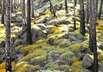 Wald-teneriffa-kopie
