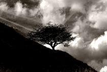 Silhouette by Bernard Cavanagh