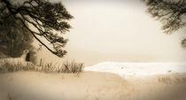 Winter by Bernard Cavanagh