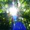 Forrest-lightbeam