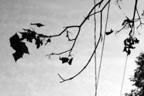 black in a sky. von Aiste Ališauskaite