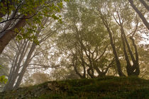 Herbstwald by photoactive