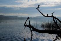 Am See von Michael Johansen