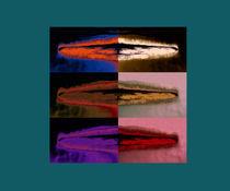 Picos de colores von Ricardo Anderson