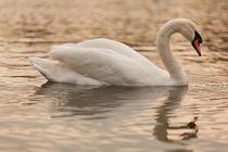 Swan von Vincenzo Mercedes