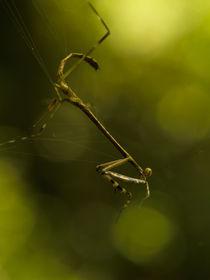 The web of life by Mandappa K C