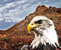 WHITEHEAD EAGLE by Maks Erlikh