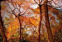 Fall in NY by Maks Erlikh