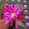 Cactus-flower