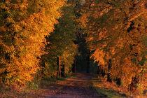 Im Leuchten der Bäume von Wolfgang Dufner