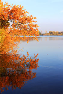 Herbst am Ufer by Wolfgang Dufner