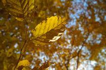 Herbst 02 by Stefan Bruett
