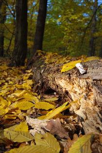 Herbst 01 by Stefan Bruett