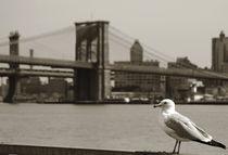 Newyork08-212-editbn-fart