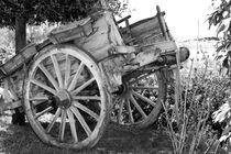 old horse cart von Federico Paoli