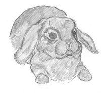 Bunny Rabbit  von Caitlin Wells