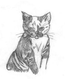 Calico Kitten  von Caitlin Wells