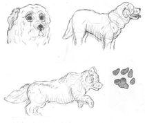 Dog-sketches-by-caitiedidd-d3k3xq6