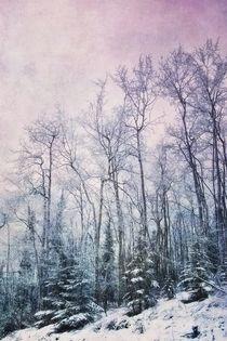 winter forest/winterwald von Priska  Wettstein