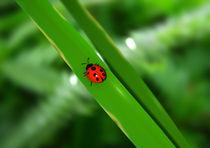 Ladybug on a leaf by Mark Seberini