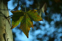Hoja-leaf-lain-de-macias