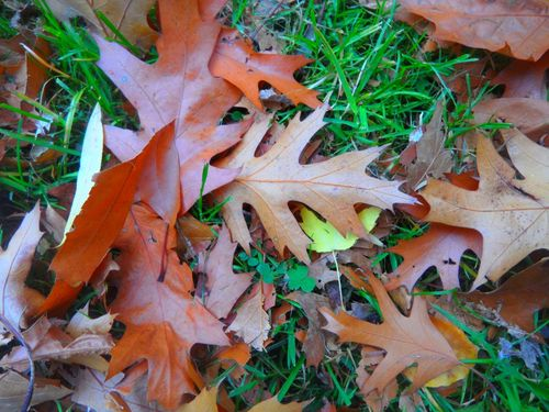 Herbstlaubmit-glcksklee