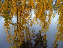 Herbst am Alsterlauf 3 von Peter Norden