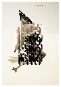 Bilo by Hani Abusamra