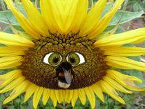 Sonnenblume mit Humel-Komik - Gesicht von regenbogenfloh