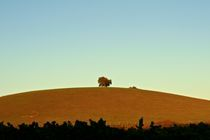 Lone tree by grapunzel