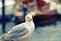 Seagull by Martin Heinz