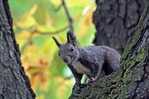 Squirrel by Martin Heinz