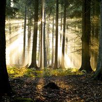 Sonnenwald von Jürgen Müngersdorf