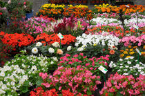 flowers market by lali-perez