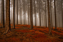 Herbstwald by Jürgen Müngersdorf