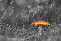 Red-cap-mushroom-3169-bw-spot-colour