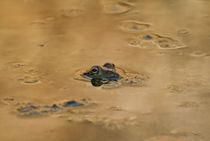 Marsh frog by Prodromos Antzoulis
