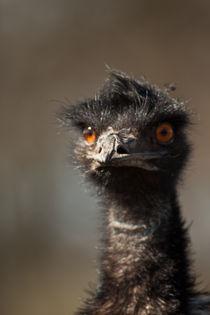 Emu by Prodromos Antzoulis