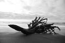 Driftwood by Weston Baker