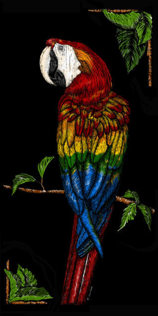 Cbeck-parrot-colorful
