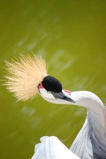 Bird in Al ain Zoo  by sylviphotography