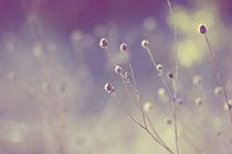autumn mood von Anastasia K