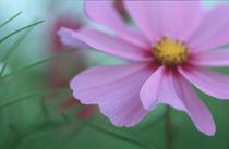 Blume by Jürgen Müngersdorf