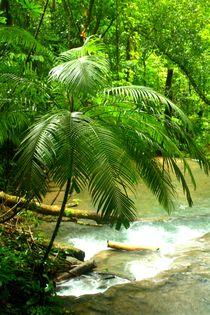 Dschungellandschaft nahe der mystischen Kultstätte Palenque in Guatemala by mellieha