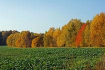 Herbstlandschaft von Juana Kreßner