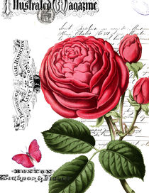 Paris-pink-rose