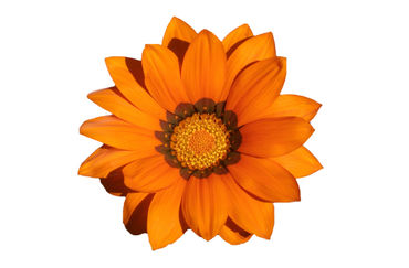 Vivid-flower